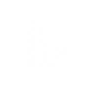 wit transp vlinder-02