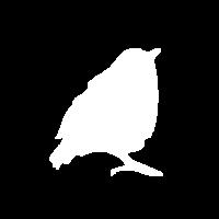 wit transp zanglijster-02